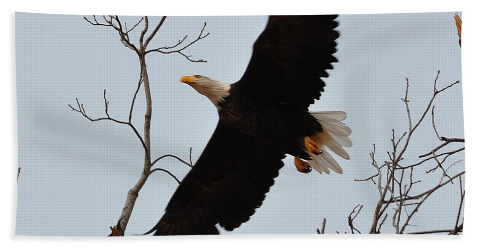 Eagle Bath Sheet featuring the photograph Flight by Terry Anderson