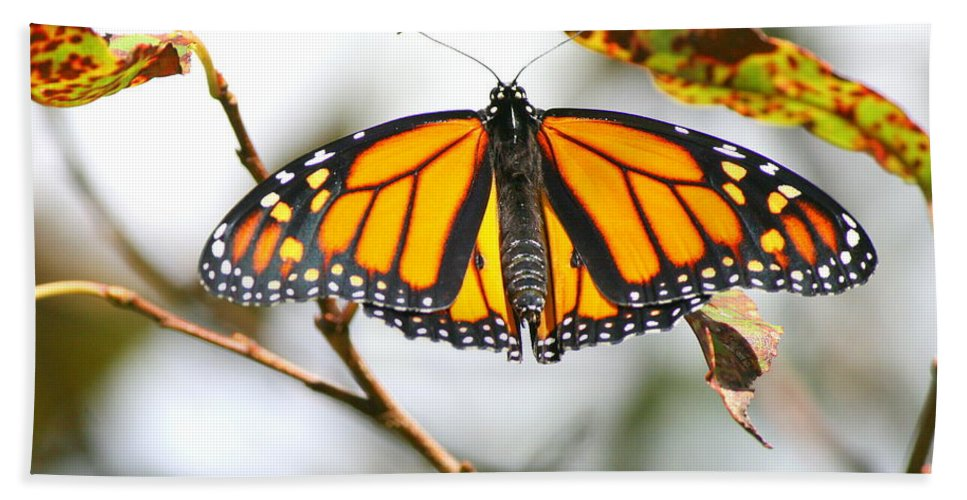 Butterfly Bath Sheet featuring the photograph Flirting Monarch by Neal Eslinger