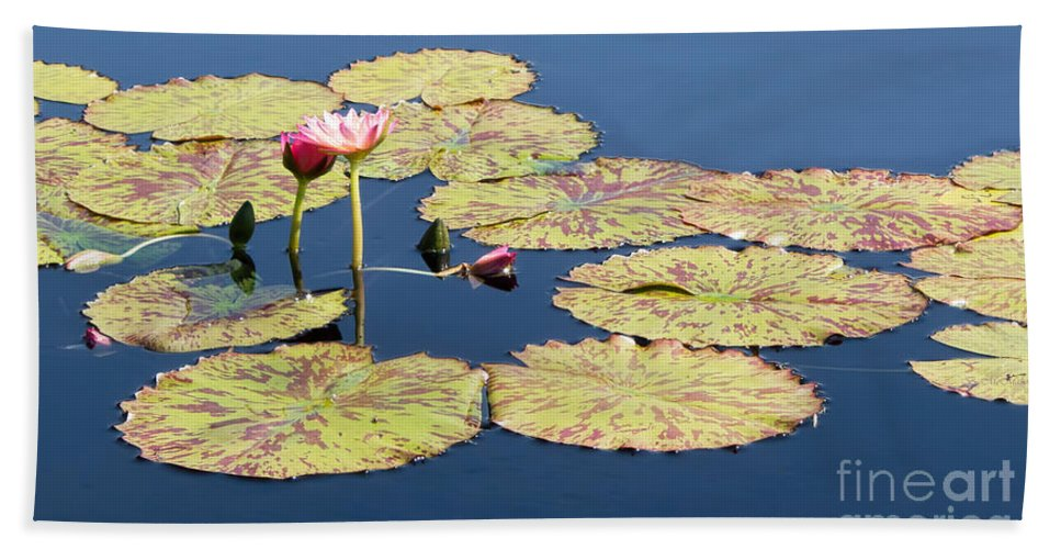 Lotus Hand Towel featuring the photograph Floating On The Breath by Barbara McMahon