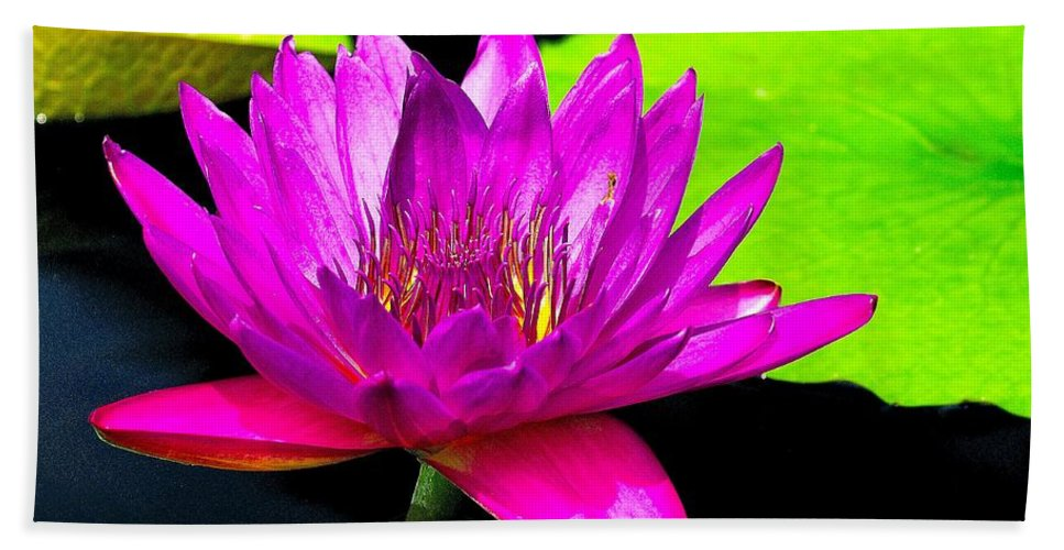 Aquatic Bath Sheet featuring the photograph Floating Purple Water Lily by Nick Zelinsky