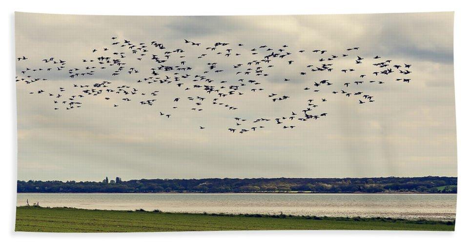 Bay Bath Sheet featuring the photograph Flock Of Birds by Svetlana Sewell