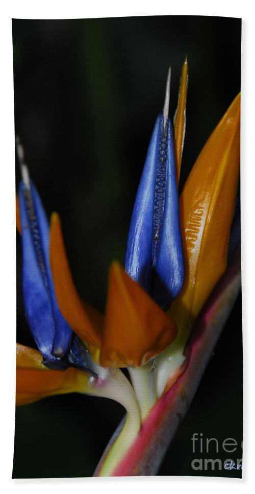 Bird Of Paradise Hand Towel featuring the photograph Floral Points by Cindy Manero