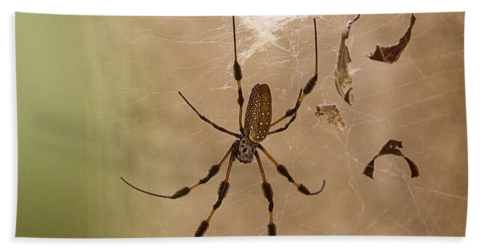 Florida Hand Towel featuring the photograph Florida Banana Spider by Roger Wedegis