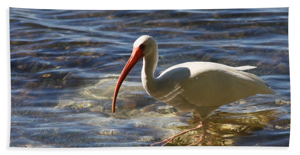 Ibis Bath Sheet featuring the photograph Florida Ibis by Christiane Schulze Art And Photography