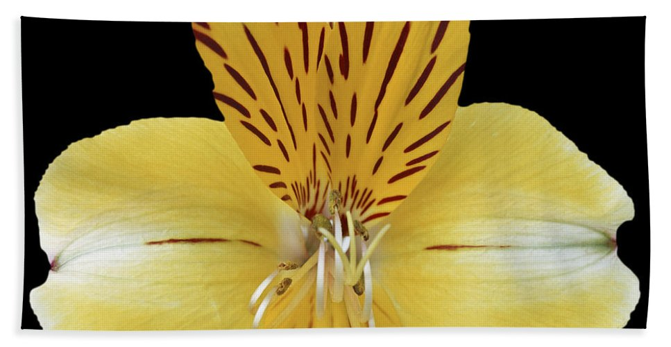 Flower Bath Sheet featuring the photograph Flower 001 by Ingrid Smith-Johnsen