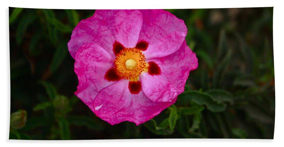 Flower Bath Sheet featuring the photograph Flower 1 by Carol Tsiatsios