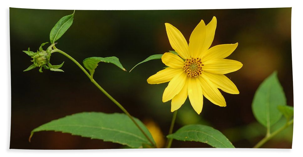 Flower Hand Towel featuring the photograph Flower And Bud by James DeFazio