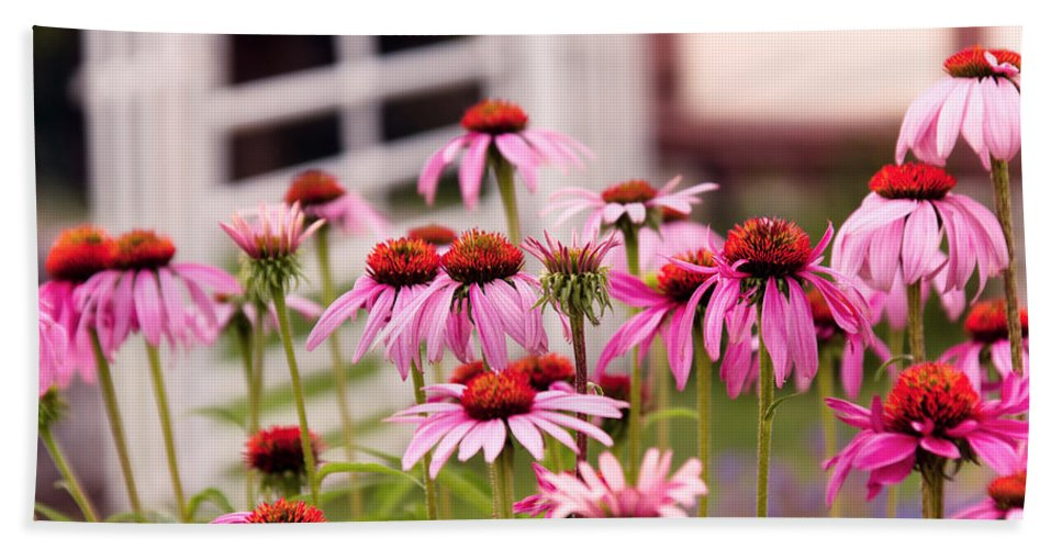 Echinacea Bath Sheet featuring the photograph Flower - Cone Flower - In An English Garden by Mike Savad