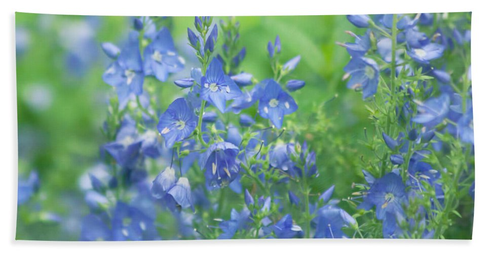 Purple Bath Sheet featuring the photograph Flower Frenzy by Kim Hojnacki