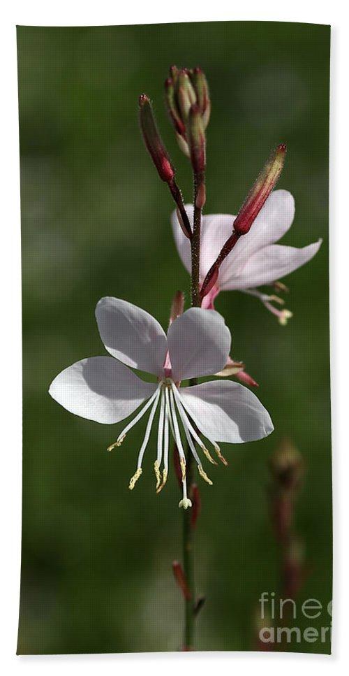 Flower Hand Towel featuring the photograph Flower-gaura-white by Joy Watson