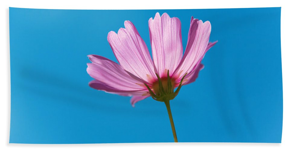Pink Bath Sheet featuring the photograph Flower - Growing Up In Philadelphia by Mike Savad