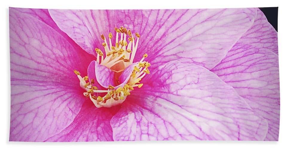 Flower Bath Sheet featuring the photograph Flower by Les Cunliffe