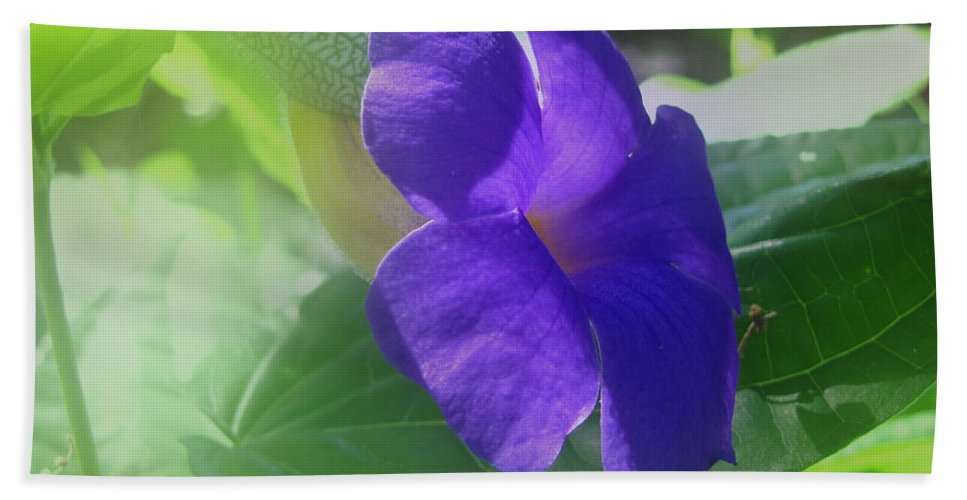 Penne Hand Towel featuring the photograph Flower No. 2 by Phil Penne