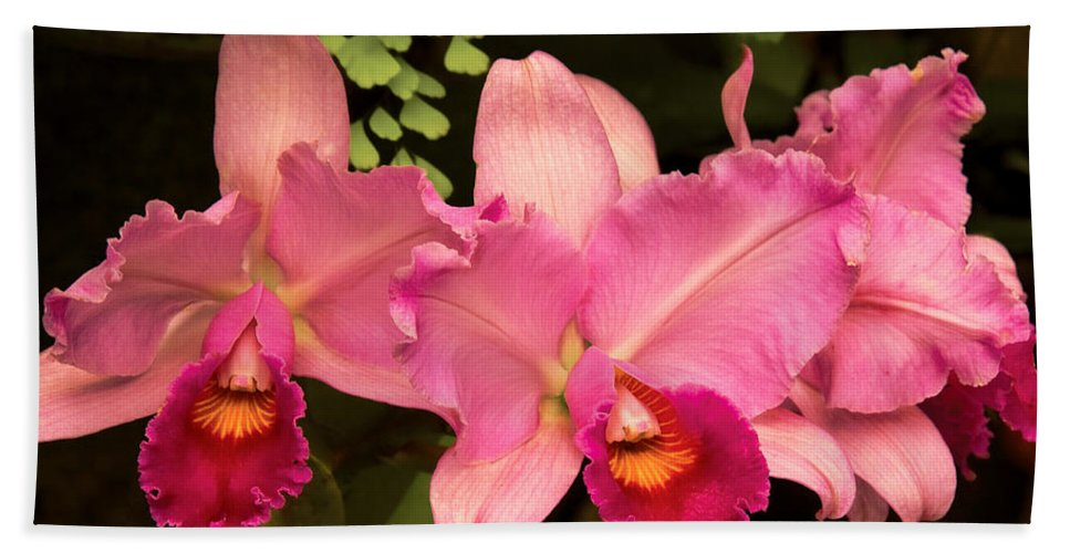 Orchid Bath Sheet featuring the photograph Flower - Orchid - Cattleya - Magenta Splendor by Mike Savad