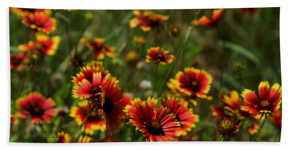 Austin Texas Bath Sheet featuring the photograph Texas Indian Blanket - Luther Fine Art by Luther Fine Art