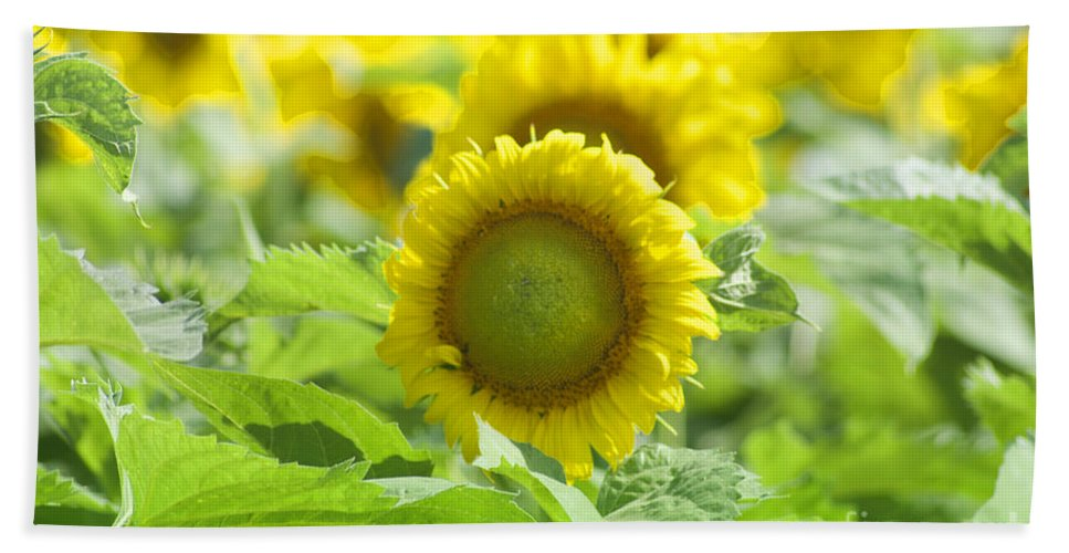 Sunflower Hand Towel featuring the photograph Flower - Texas Sunflower Field 1 - Luther Fine Art by Luther Fine Art