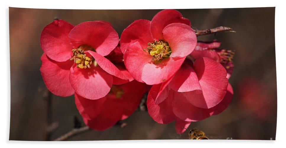Bubbleblue Bath Towel featuring the photograph Flowering Quince With Bee by Joy Watson