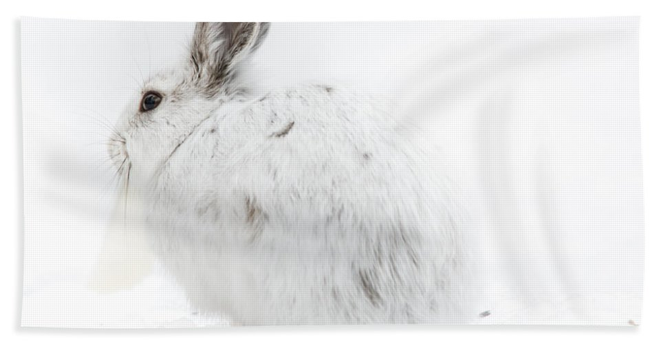 Landscape Hand Towel featuring the photograph Fluffy Winter Bunny by Cheryl Baxter
