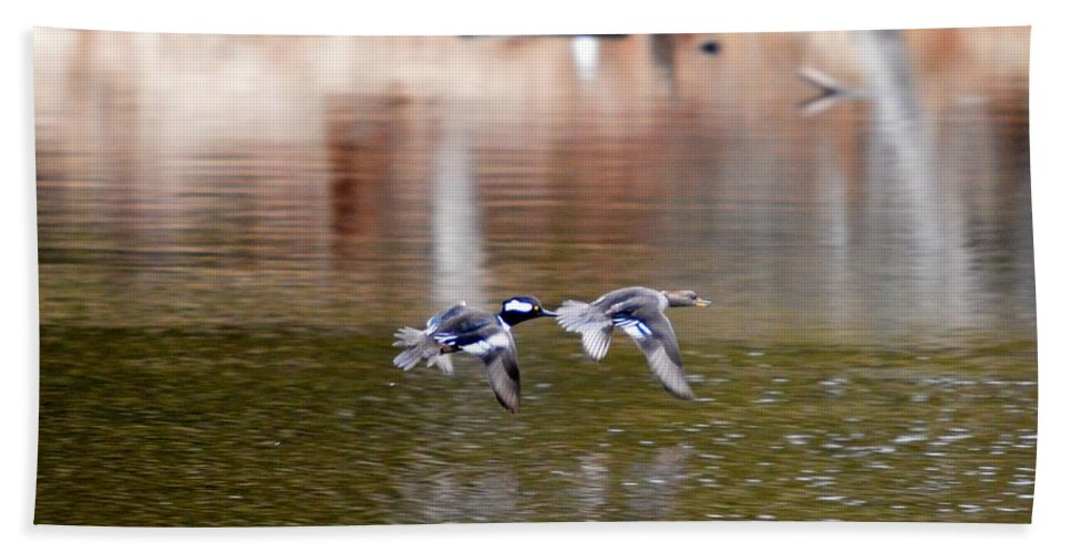 Hooded Merganser Bath Sheet featuring the photograph Flyers by Thomas Phillips