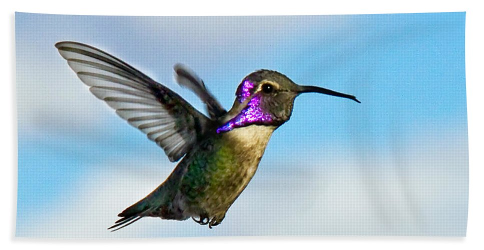 Birds Bath Sheet featuring the photograph Flying Costa's by Robert Bales
