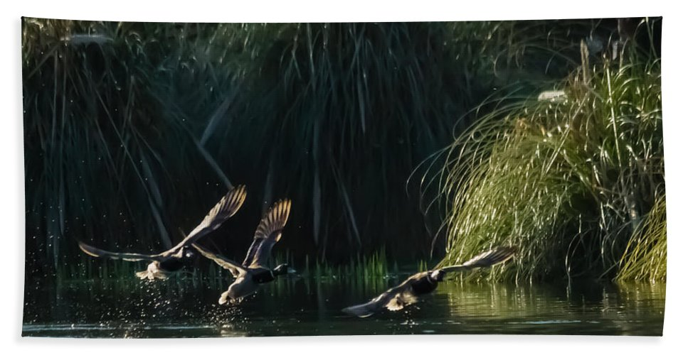 Dawn Oconnor Hand Towel featuring the photograph Flying Ducks by Dawn OConnor