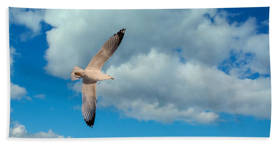 Seagull Hand Towel featuring the photograph Flying High by Bianca Nadeau