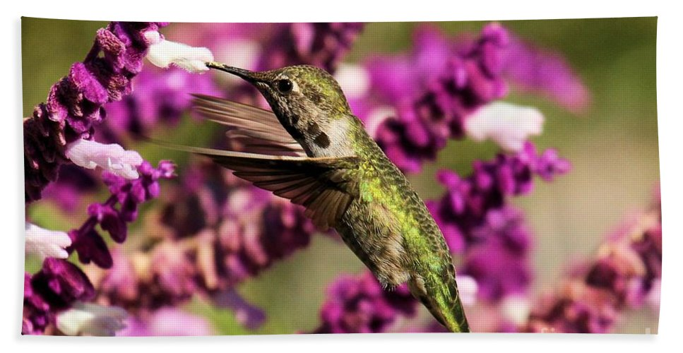 Point Reyes Bath Sheet featuring the photograph Flying In Lunch by Adam Jewell