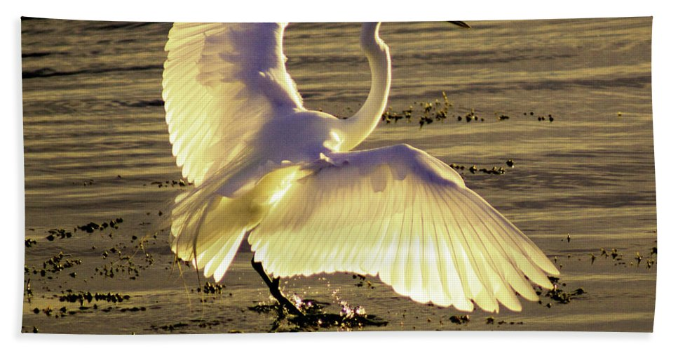 Animal Bath Sheet featuring the photograph Flying In V2 by Joe Geraci