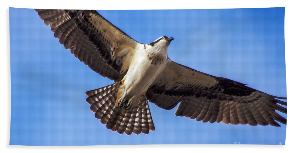 Osprey Bath Sheet featuring the photograph Flying Osprey by Robert Bales