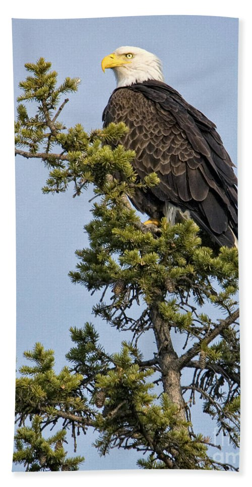 Eagles Hand Towel featuring the photograph Focused by Claudia Kuhn