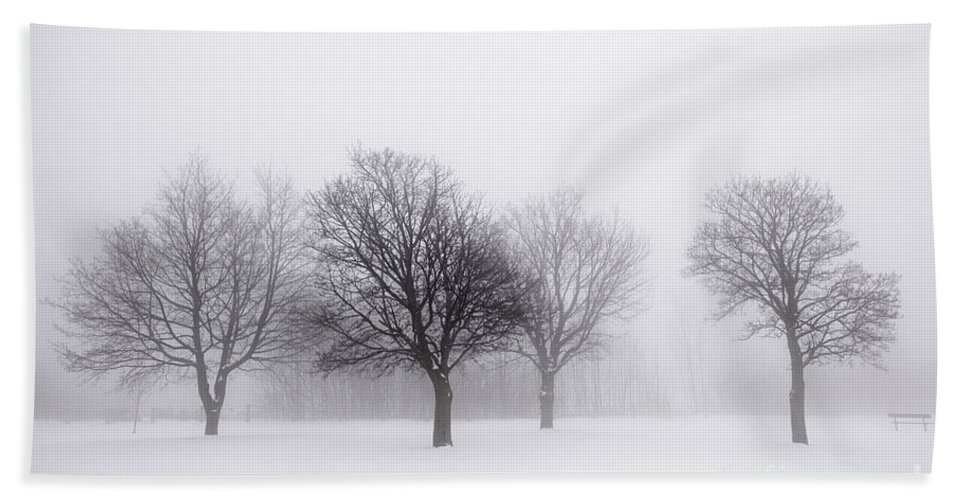 Trees Hand Towel featuring the photograph Foggy Park With Winter Trees by Elena Elisseeva