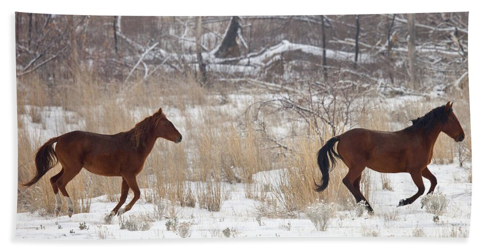 Mustang Hand Towel featuring the photograph Follow the Leader by Mike Dawson