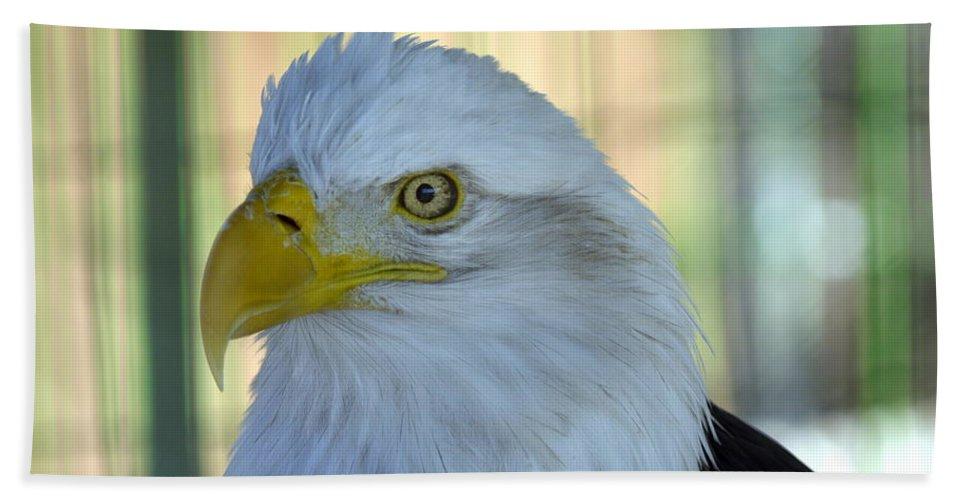 Eagle Hand Towel featuring the photograph Fontana Eagle Portrait 4 by Bonfire Photography