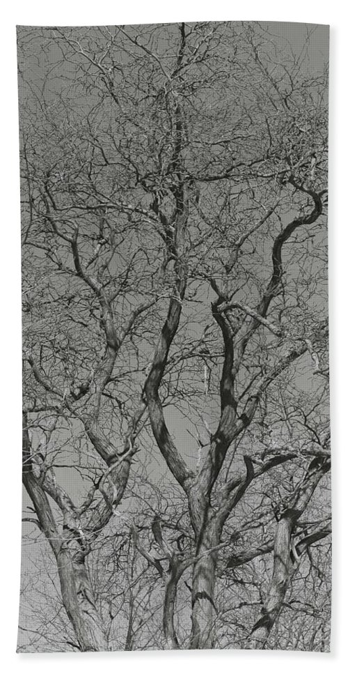 Trees Bath Sheet featuring the photograph For The Love Of Trees - 2 - Monochrome by Hany J