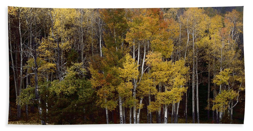Forest Hand Towel featuring the photograph Forest Colors by Lynn Sprowl