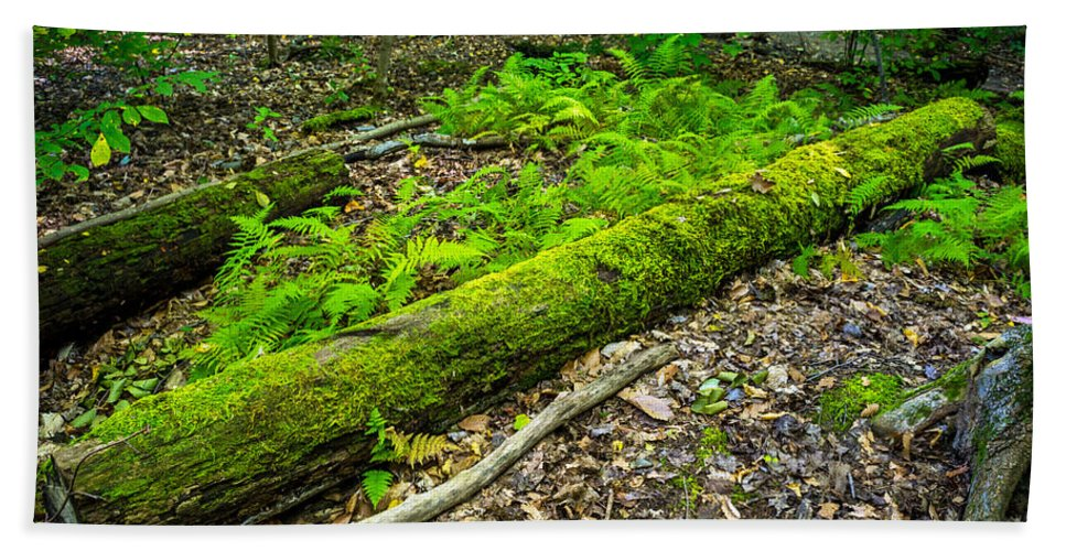 Gosnell Big Woods Bath Sheet featuring the photograph Forest Floor Gosnell Big Woods by Tim Buisman