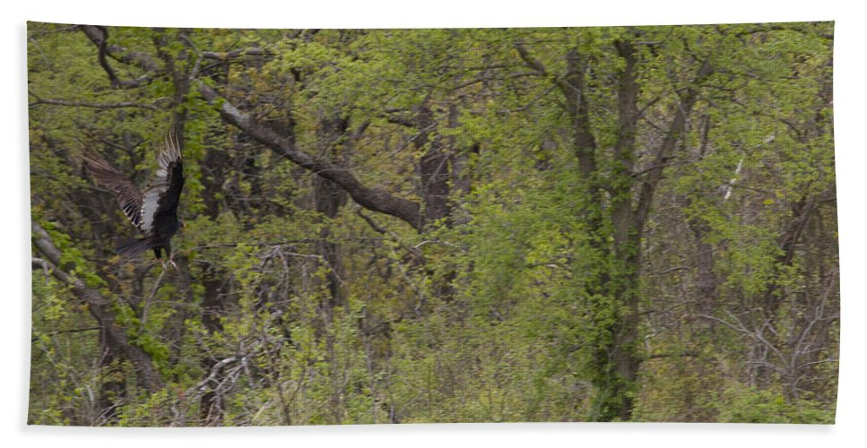 Great Blue Heron Photographs Hand Towel featuring the photograph Forest Glimpse by Vernis Maxwell