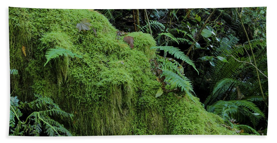 Landscape Bath Sheet featuring the photograph Forest Greenery by Darleen Stry