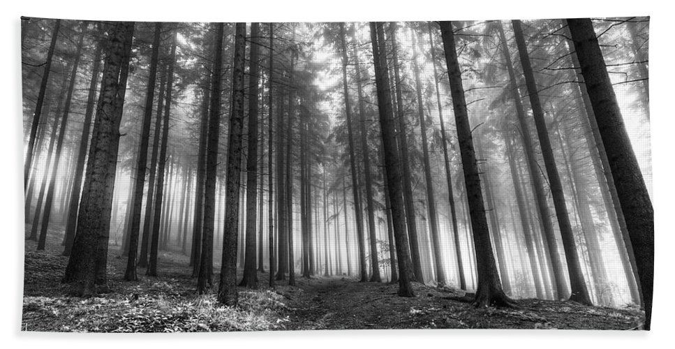 Black And White Hand Towel featuring the photograph Forest In The Mist by Michal Boubin