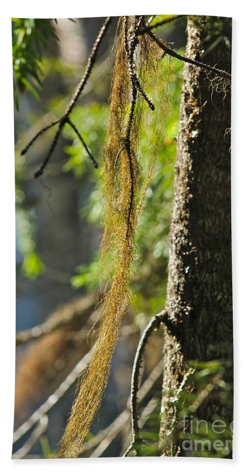 Tree Bath Towel featuring the photograph Forest Moss by Rick Monyahan