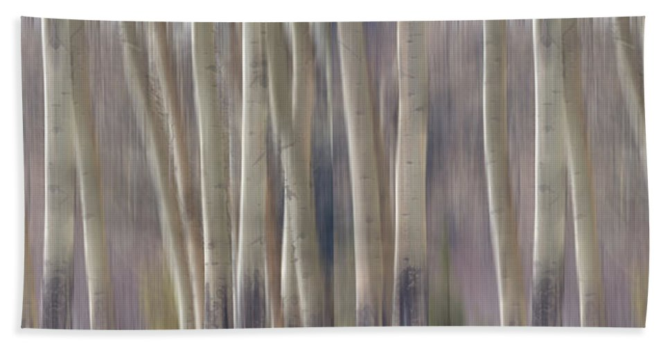 Forest Hand Towel featuring the photograph Forest Of Dreams 2 Panorama by James BO Insogna