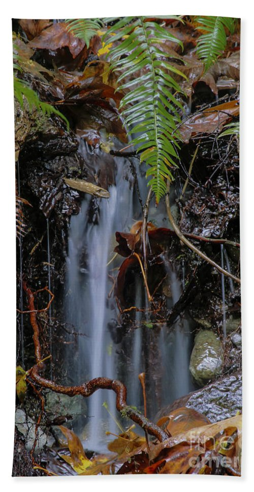 Landscape Bath Sheet featuring the photograph Forest Streamlet by Darleen Stry
