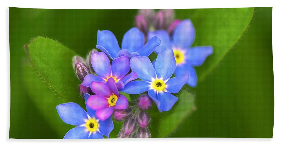 Forget-me-not Bath Sheet featuring the photograph Forget-me-not Stylized by Sharon Talson