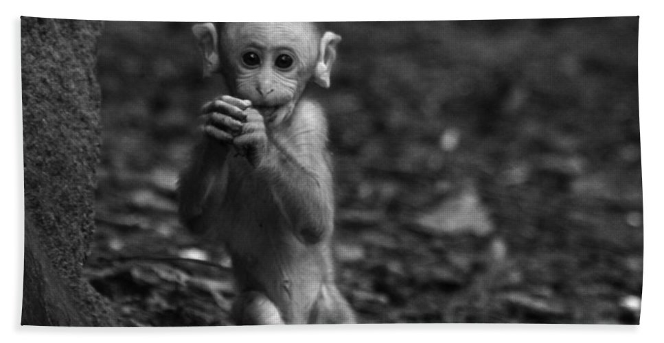 Monkey Hand Towel featuring the photograph Found Something Interesting Mom by Ramabhadran Thirupattur