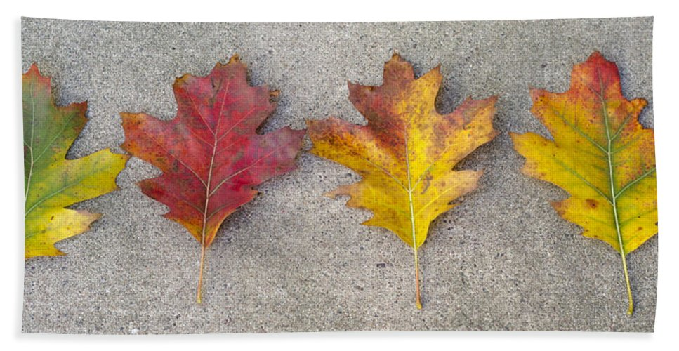 Leaves Hand Towel featuring the photograph Four Autumn Leaves by Lynn Hansen