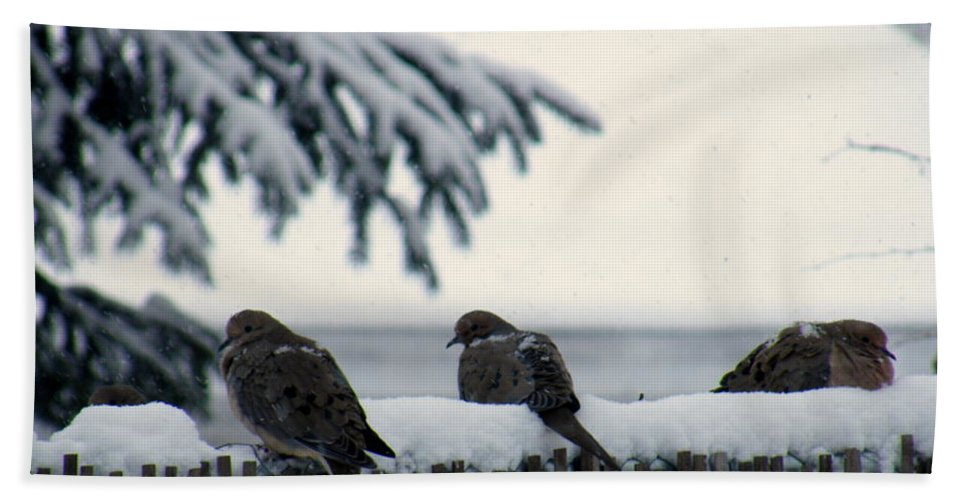Turtle Doves In Snow Hand Towel featuring the photograph Four Turtle Doves by Kitrina Arbuckle