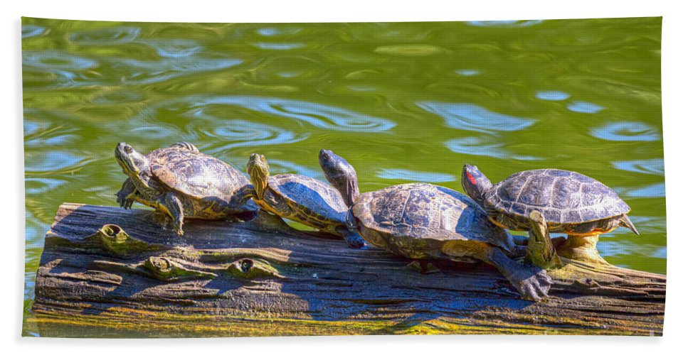 Golden Gate Park Bath Sheet featuring the photograph Four Turtles by Kate Brown