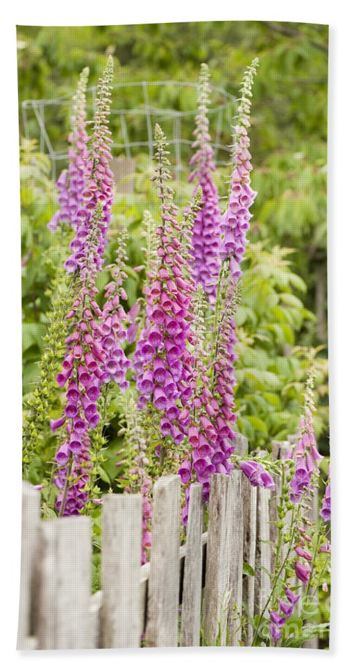 Foxglove Hand Towel featuring the photograph Foxglove Fence by Anne Gilbert