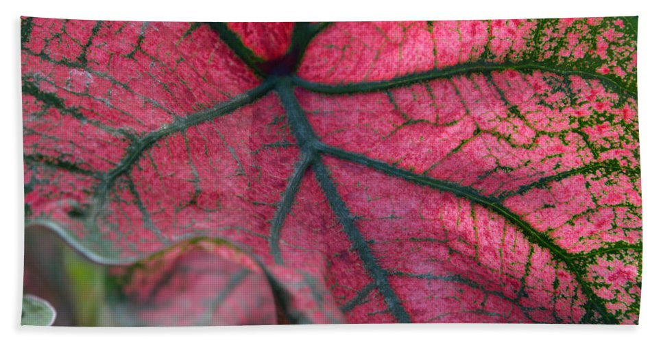 Plants Bath Sheet featuring the photograph Fractal Micropolis by Erin O'Neal-Morie