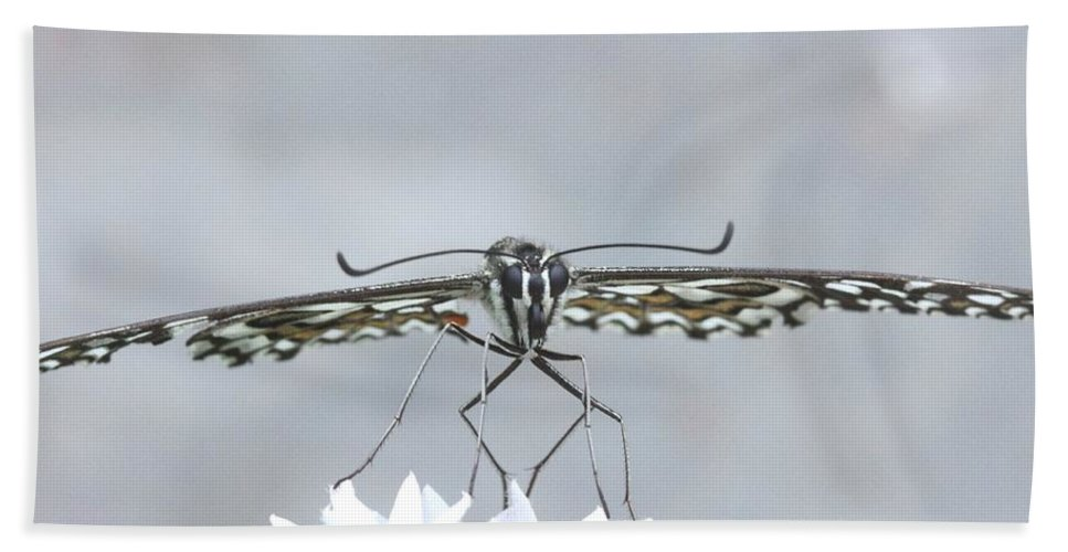 Butterfly Hand Towel featuring the photograph Fragile by Ramabhadran Thirupattur